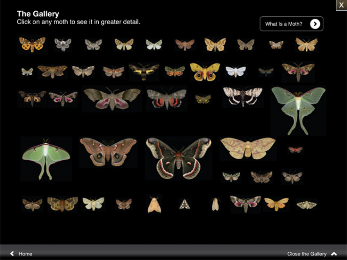 moths02.png
