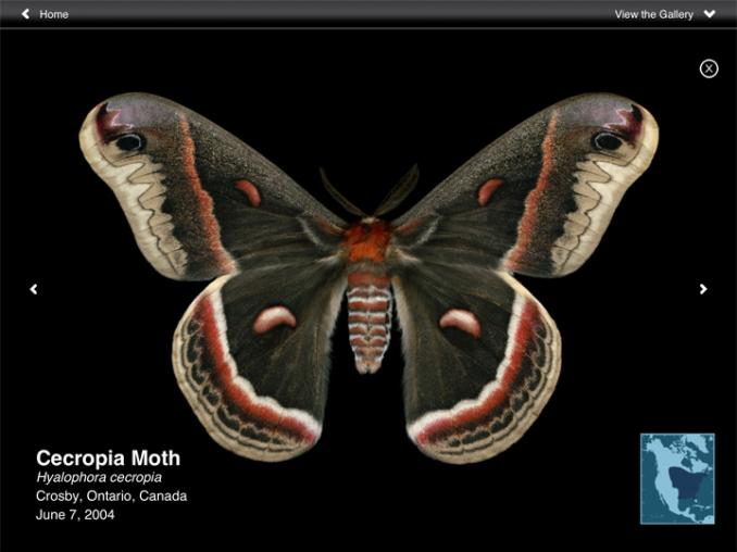 moths03.png
