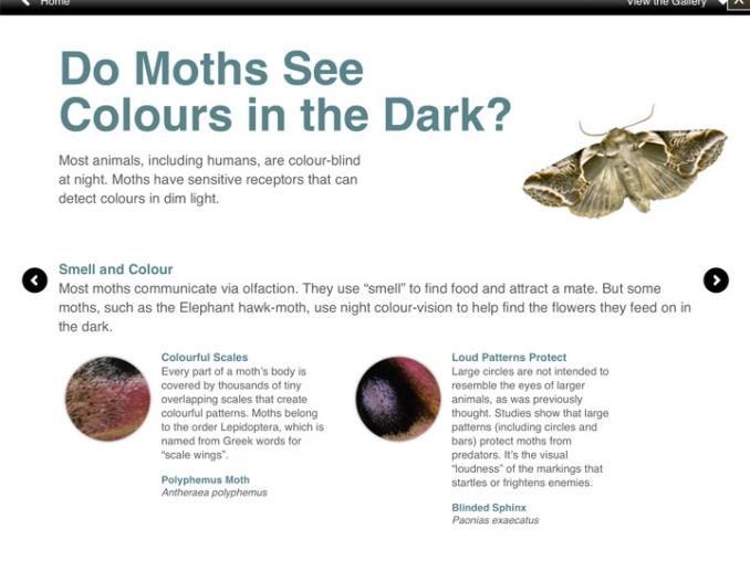 moths04.png